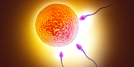 Fertility and IVF